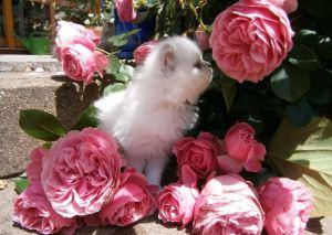 kleine Katze im Rosenblütenmeer